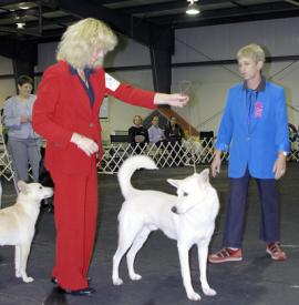 "Lorna Hastings and ""Blaze"" endure the critical gaze of judge Myrna Shiboleth at the 2004 CDCA National Specialty."