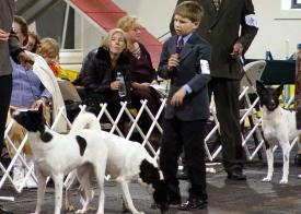 Ethan Miller, Junior Handler, at the 2004 CDCA National Specialty.