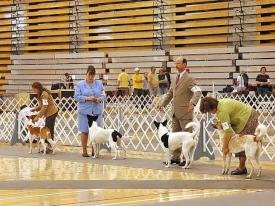 Champion dogs at the 2005 National Specialty.