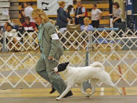 Cathi Oskow and Mazel Tov HaTikvah, Winners Dog at the 2005 National Specialty.