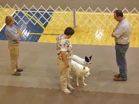 "Denise Gordon with ""Wolf"" and ""Smudge"" competing in Brace Obedience."